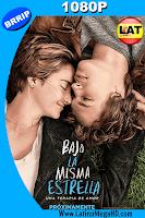 Bajo La Misma Estrella (2014) Latino HD 1080P - 2014