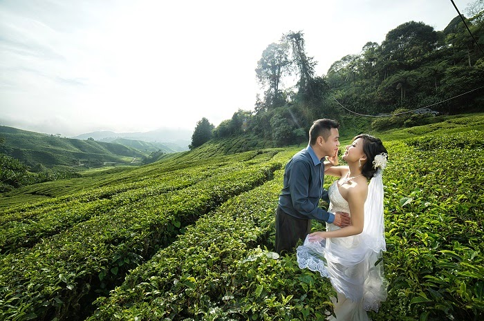no kiss yet tea boh plantation