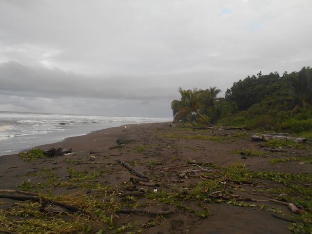 Beach of Toruguero, Costa Rica