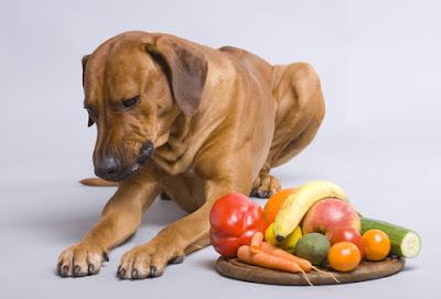 Adekvatna ishrana i suplementacija potrebna je psima sa Adisonovom bolešću