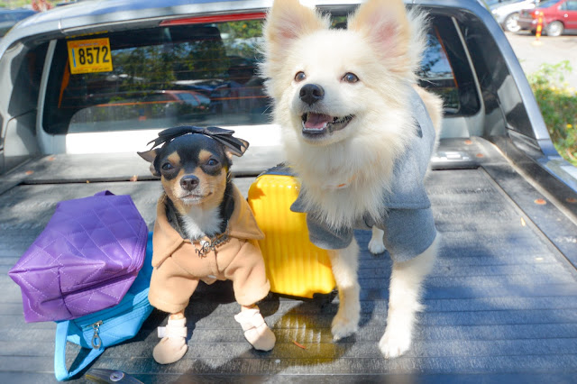 10 Basic Rules and Tips for Traveling With Your Dog