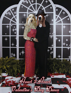 Basset and GBGV dogs dressed as humans at formal Valentine's Day dance