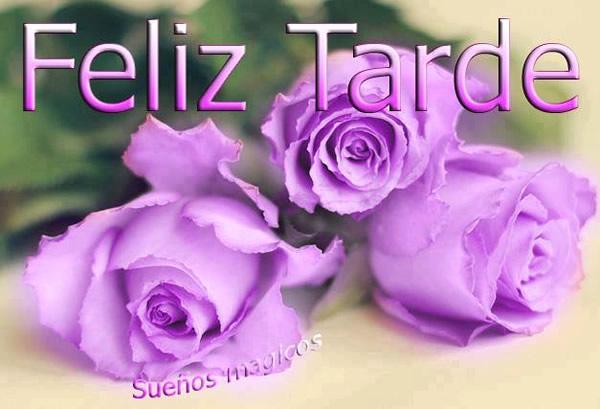 rosas violetas Feliz Tarde