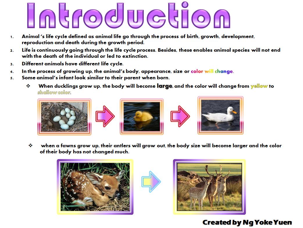 Animal S Animal Life Cycle
