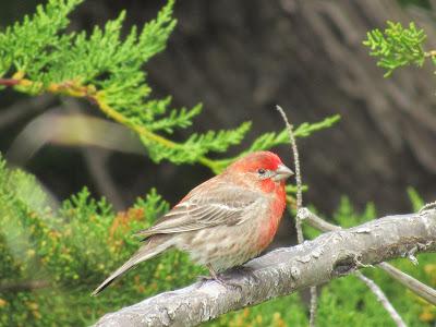 Mendocino Headlands State Park California