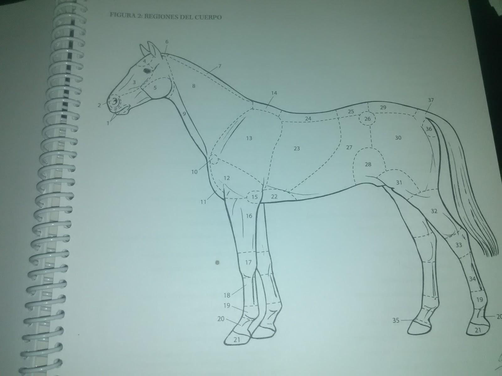 Hermosa Anatomía Y Fisiología Para Colorear Libro Capítulo Clave 9 ...