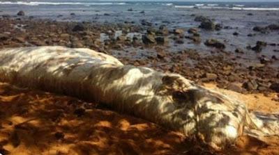 Άγνωστο πλάσμα ξεβράστηκε σε παραλία των Φιλιππίνων