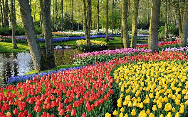 Flores no Jardim Keukenhof em Amsterdã