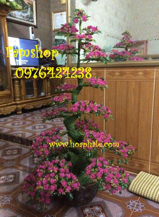 Goc bonsai cay hoa mai tai Duong Dinh Nghe