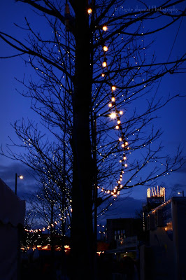 tree decorated with lights