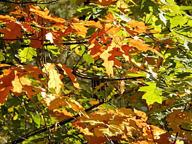 Autumn8 001 - Golden Light