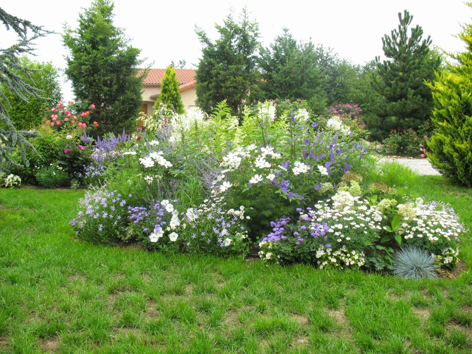 Roses du jardin ch neland fleurs bleues estivales Massif decoratif jardin