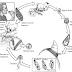 Cacing Hati atau Fasciola hepatica