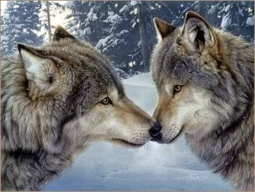 sergala setia terhadap pasangannya
