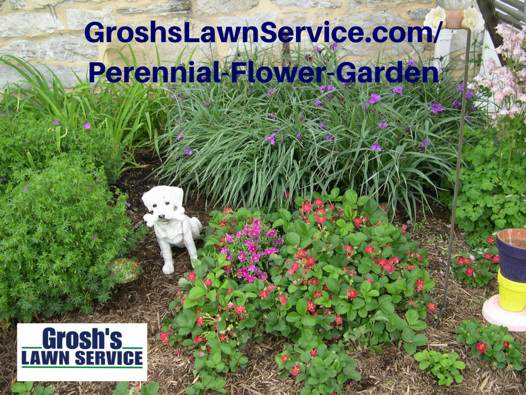 Groshs Lawn Service Fall Perennial Landscape Hagerstown Md
