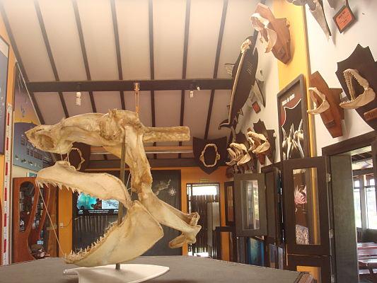 museu tubarao noronha