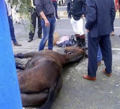 Se repite la escena: un caballo deshidratado cae desplomado en la Feria de Sevilla