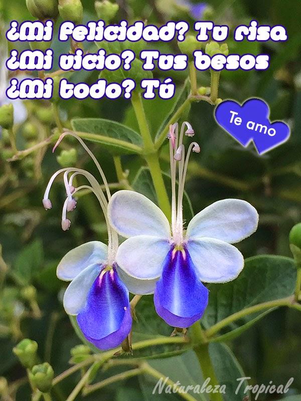 frase de amor con flor bella