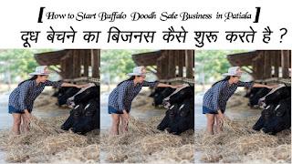 How to Start Buffalo  Doodh  Sale Business in Patiala
