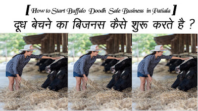 How to Start Buffalo  Doodh  Sale Business in Patiala
