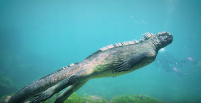 Massive marine iguana was seen swimming along side divers