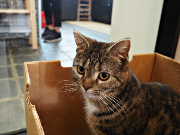 kortrijk kattencafé