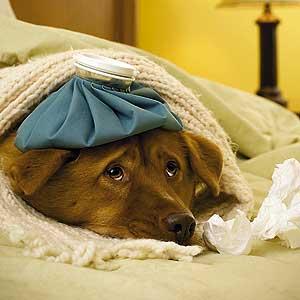 Enfermedades Caninas