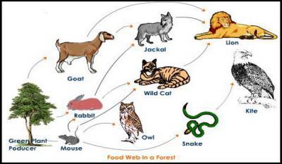 Macam Macam Rantai Makanan Beserta Tingkat Trofik Piramida Ekologi