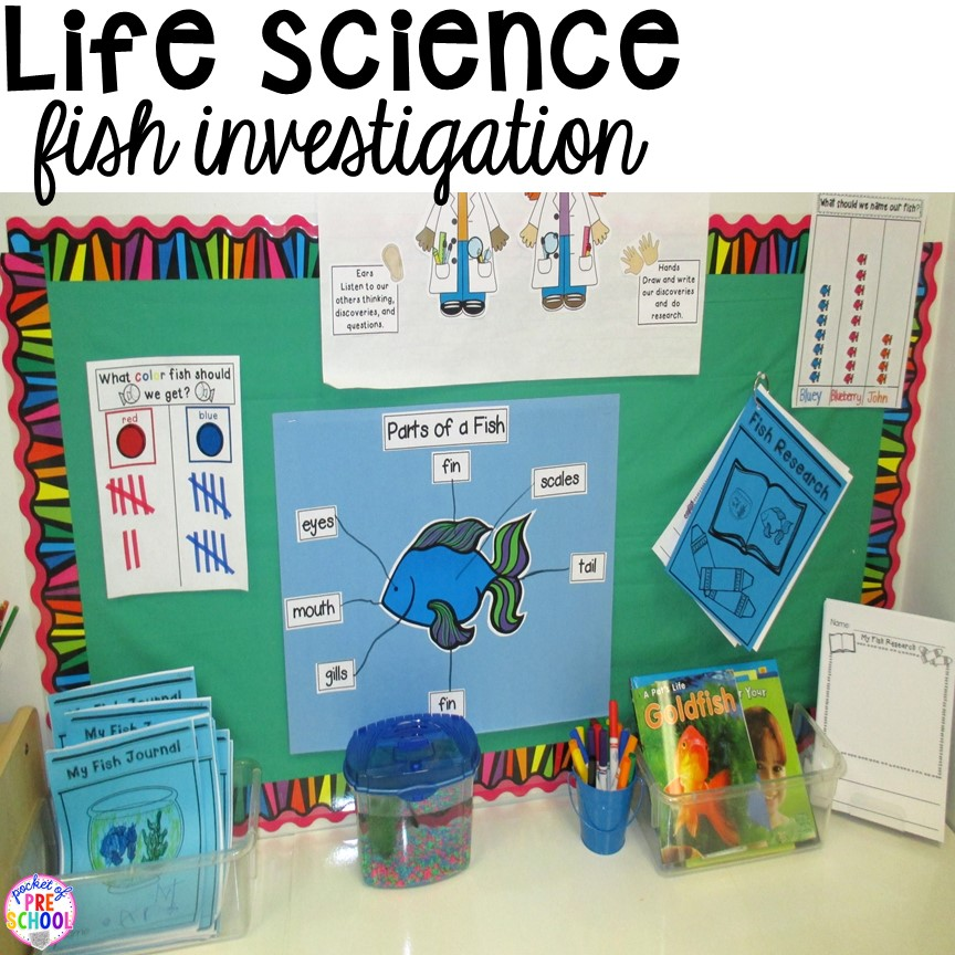 Classroom Pet Ideas : How to set up the science center in your early childhood