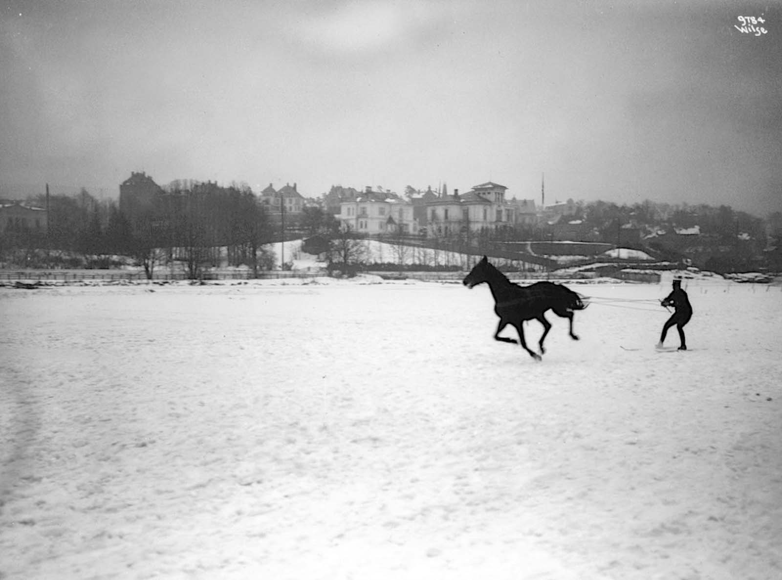 Skijoring is derived from the Norwegian word skikjøring, meaning
