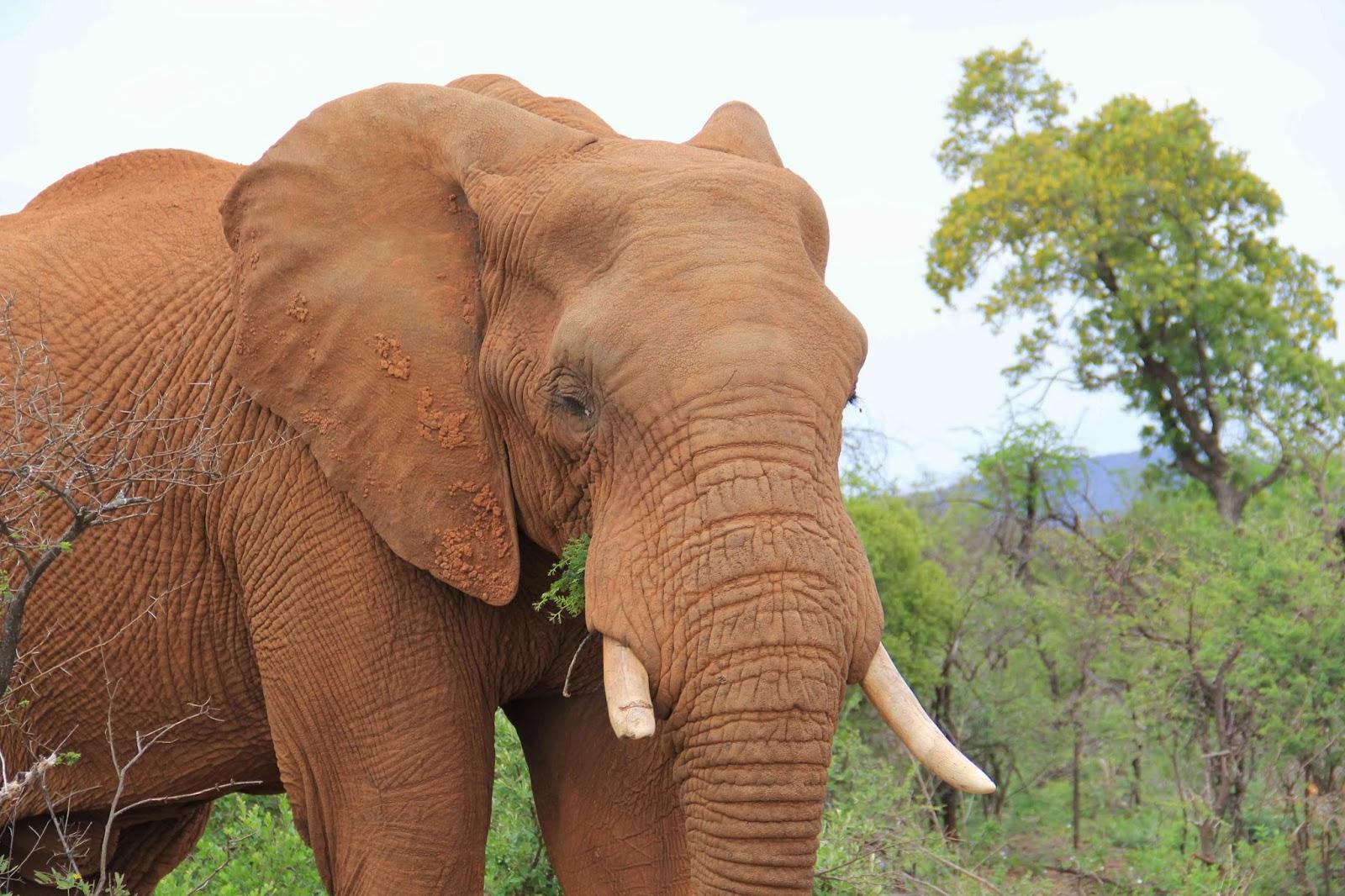 Sudafrica  Safari alla Madikwe Game Reserve  Viaggi e