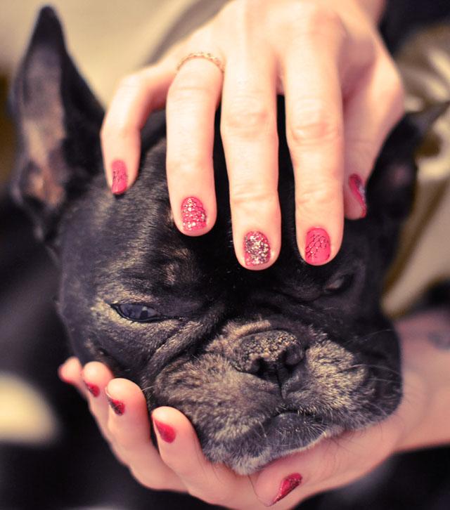 french bulldog, nail art idea