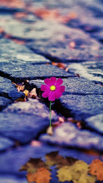 Flower Wallpaper ZenFone 3