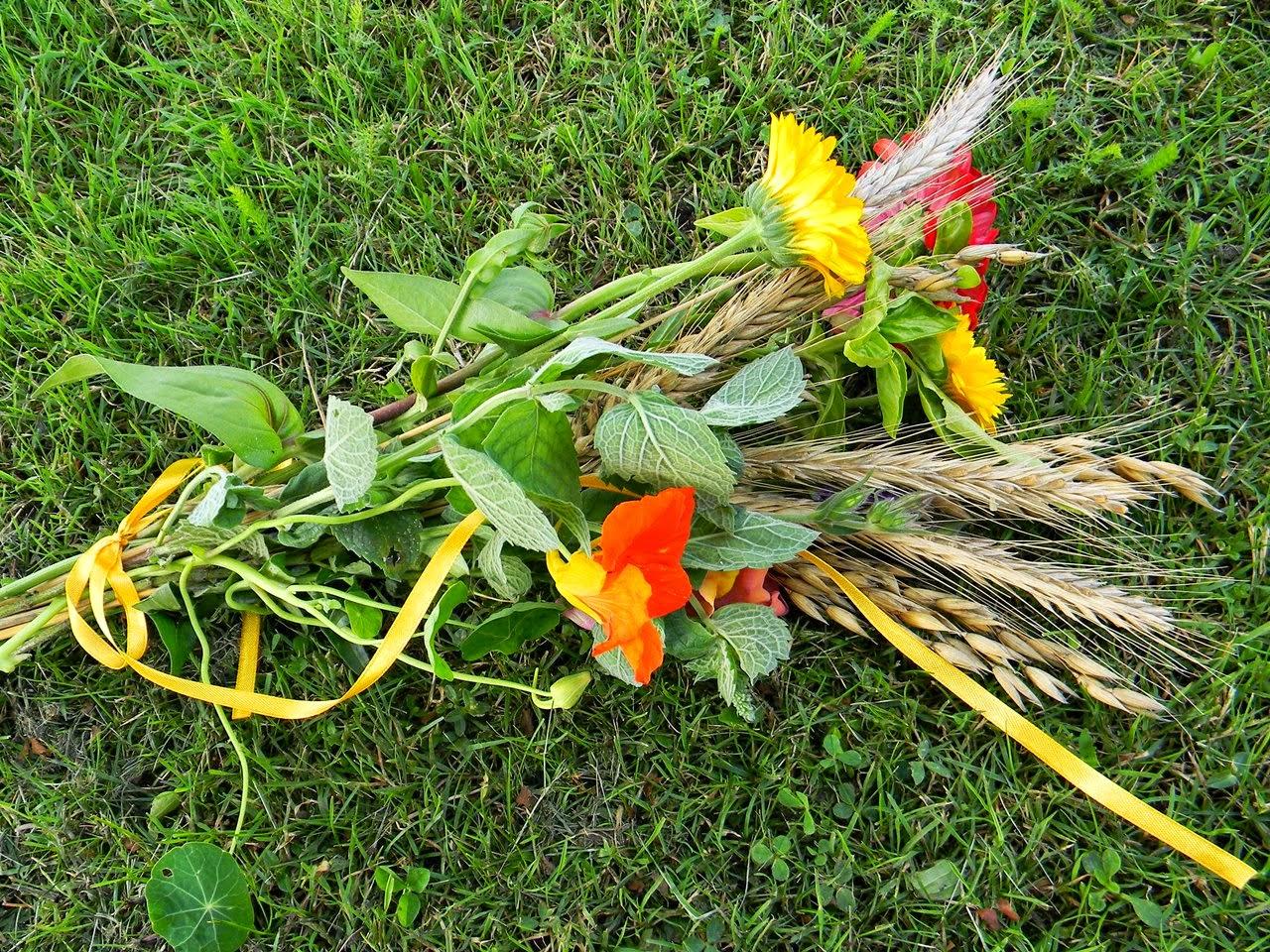 mięta, cynia, zboża, kwiaty