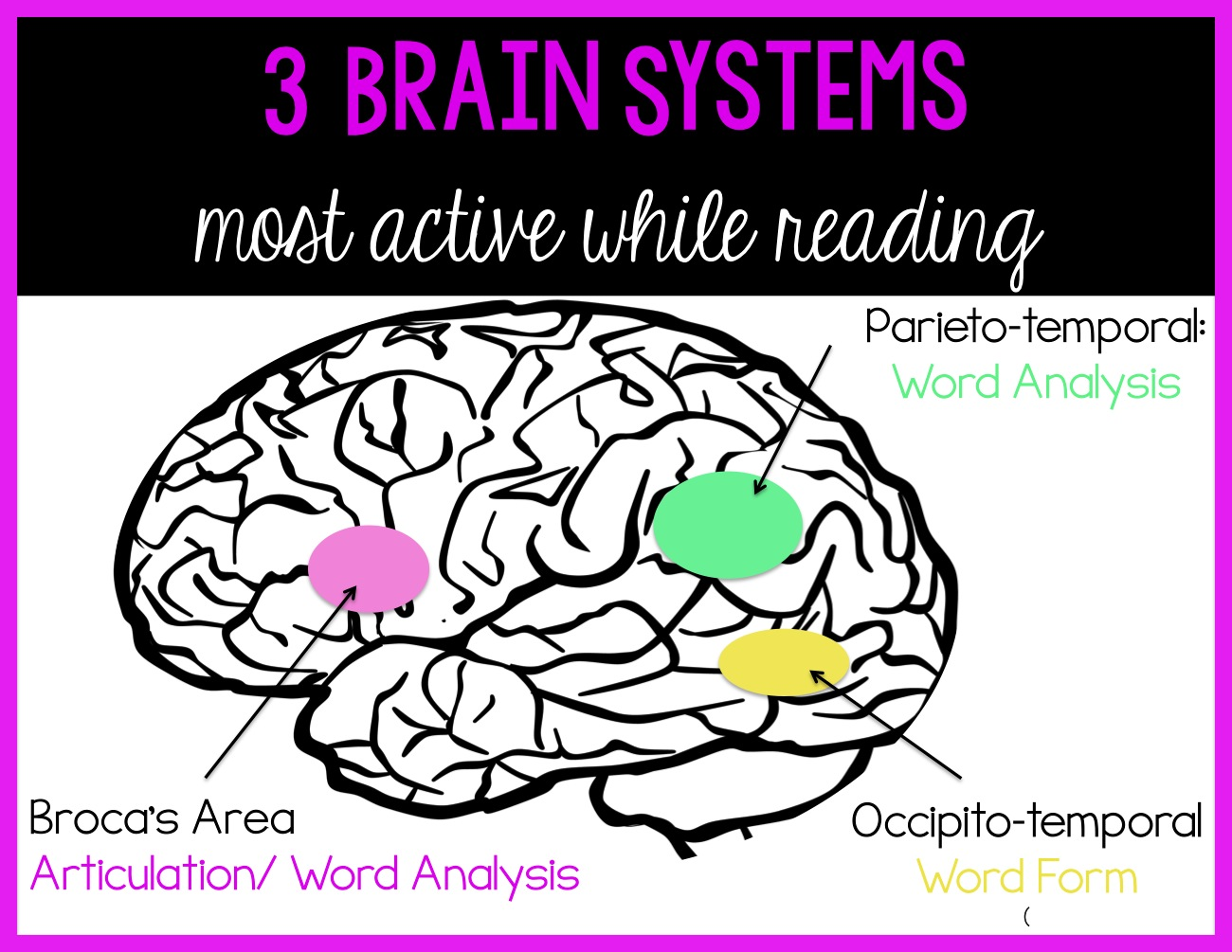 Sarah's First Grade Snippets: Reading and the Brain