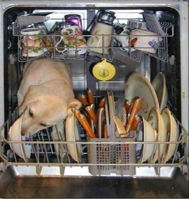 Những thứ không bao giờ đặt trong máy rửa bát