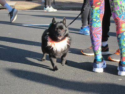 a small black dog with an orange scarf standing on the street