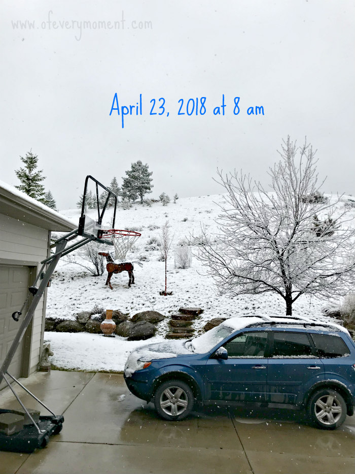 Snowy late April morning in Montana