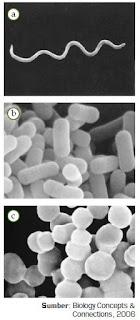 Pengertian Organisme Kingdom Monera Eubacteria serta Bentuk dan Struktur Tubuh Bakteri