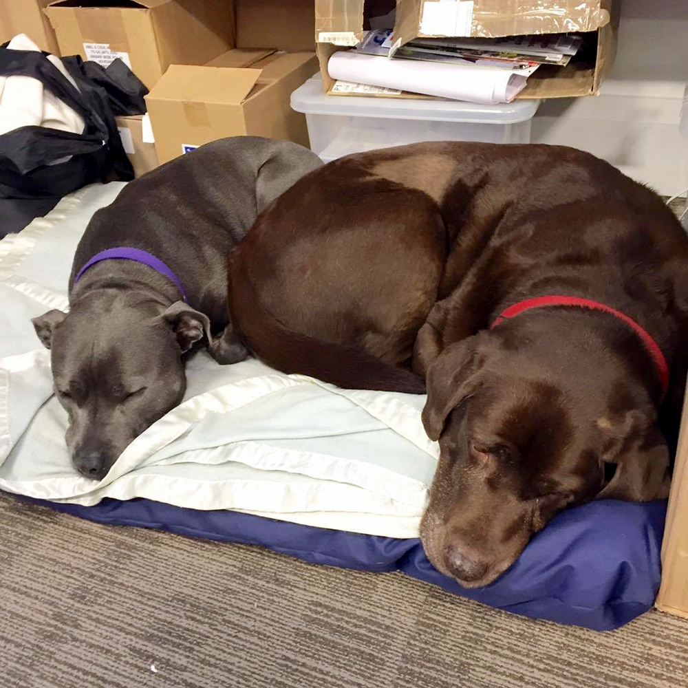 office dogs, jojo maman bebe