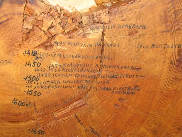 Niemijärven Nestori, vanha puu