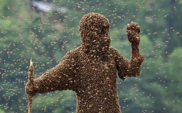 Incidente in autostrada: si rovescia camion che trasporta 30 milioni di api