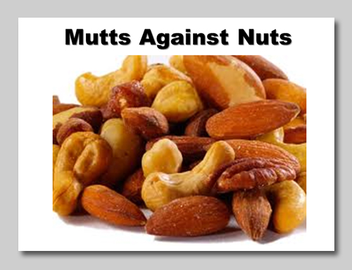 Resist the urge to toss your mutt a nut