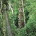 Nightjar Swam Forest - The Amazon of Bengal