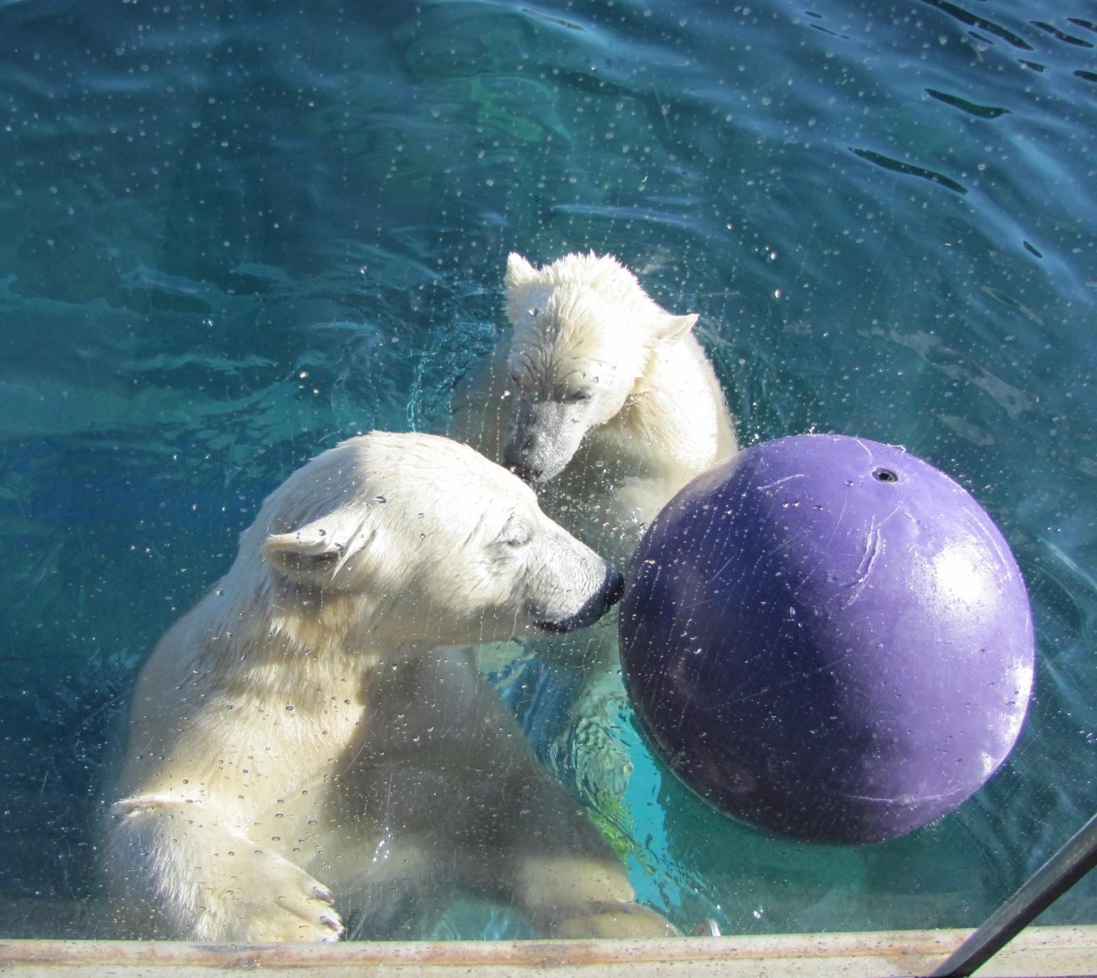 Nuniq and Neva of the Columbus Zoo
