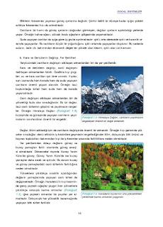 11. Sınıf Coğrafya Ders Kitabı Cevapları Gün Yayınları Sayfa 14