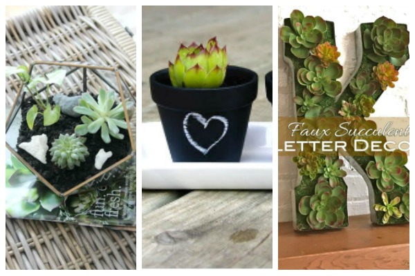 add succulents to your decor