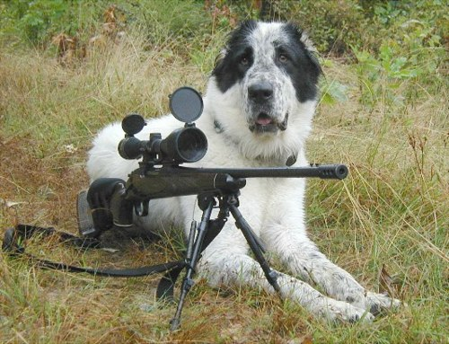 funny dog pics with guns - photo #12