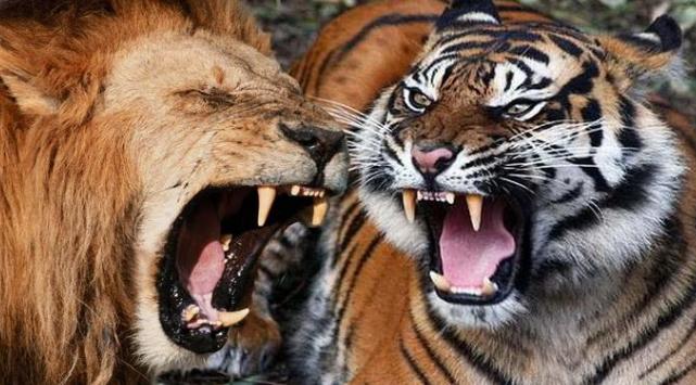 Mengapa Tidak Ada Binatang Buas Di Pulau Bawean ? Ternyata Ini Alasannya