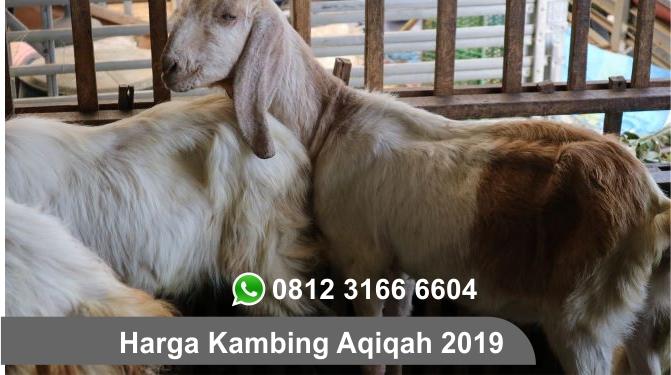 Jasa Aqiqah 2019 Surabaya, Sidoarjo, Gresik dan Seluruh Jawa Timur